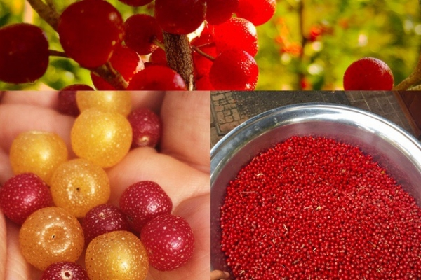 incredible-ediblesCE586A32-BC8A-BB9F-10D9-88436C509C05.jpg